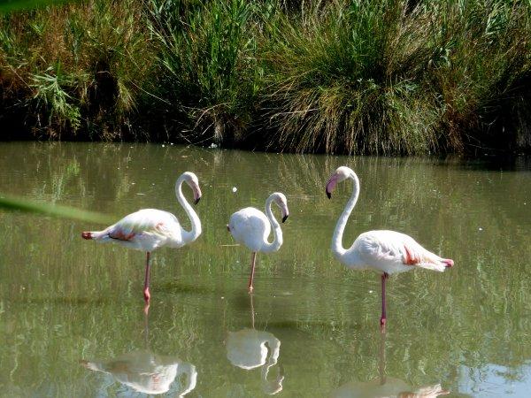 Visite d'un parc d'oiseaux sauvage