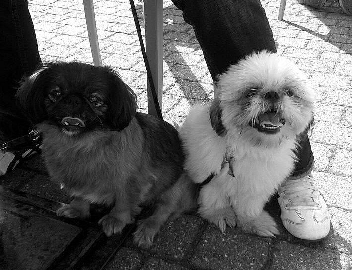 Lola & Loki