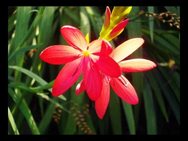 Parce qu'une Fleur ce résume à la Nature !