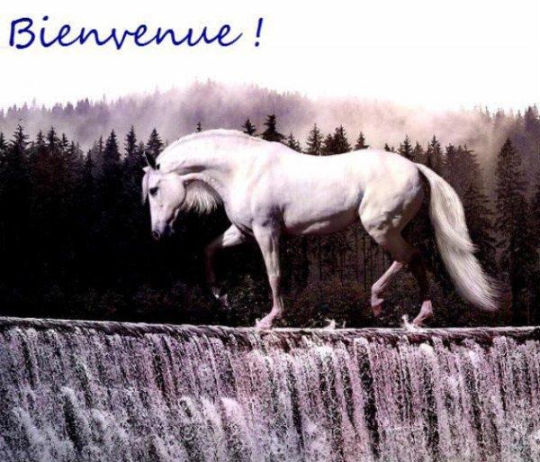 bienvenue dans mon blog dediee 100% pour les mustang et autre chevaux