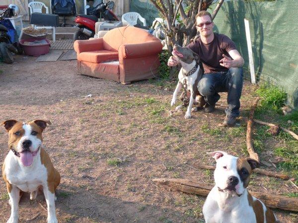 les chiens ....AMERICAN STAFF , un plaisir ;)
