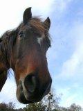 Photo de the-magic-of-these-horse