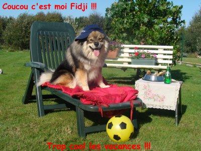 photos concours fête du club canin