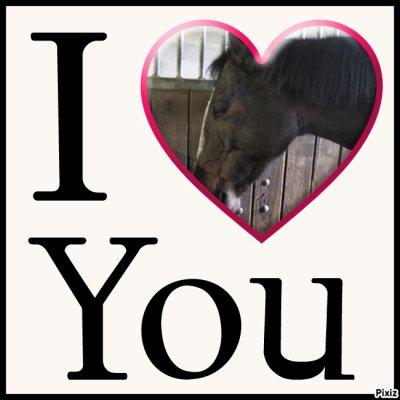 My horse ...