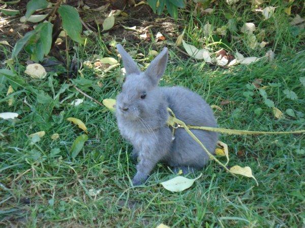 Une lapine, plus que formidable...♥