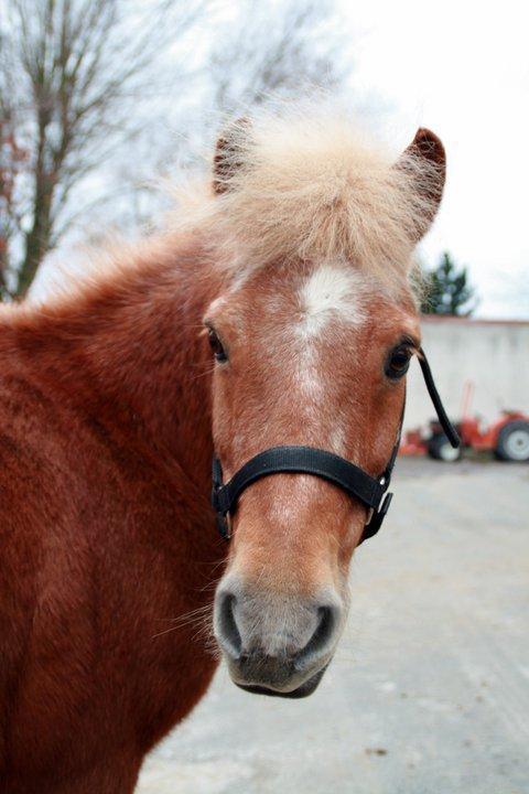 Mes photos coup de ♥ C'est les chevaux de mon centre équestre !
