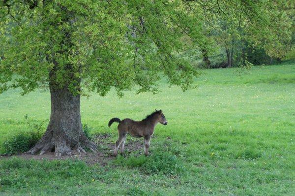 Chevaux rencontrés en Bourgogne. (Partie I)