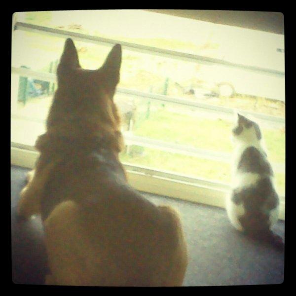 Comme chien et chat!