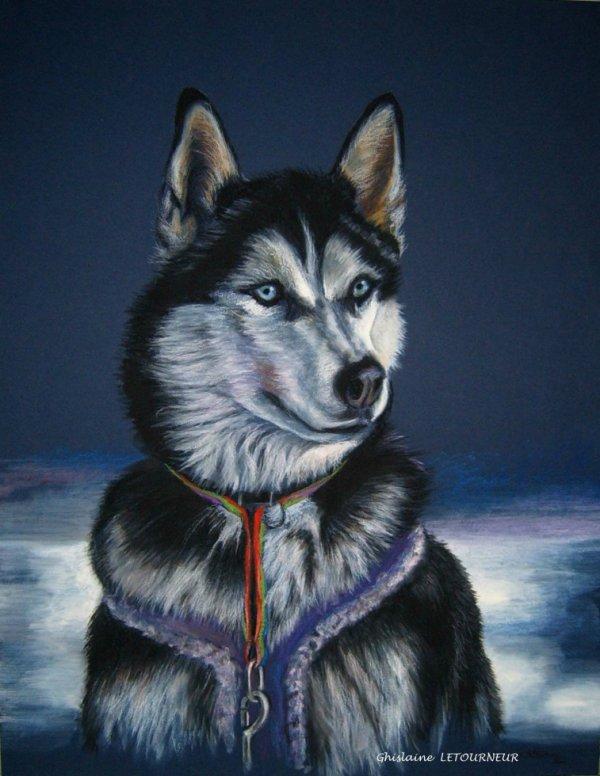 très beau dessin d' un husky