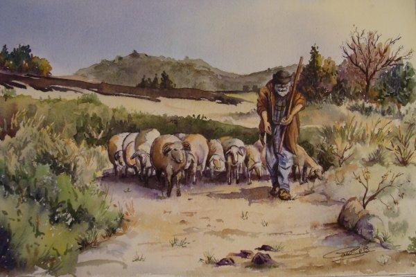 Alpilles Berger et son troupeau