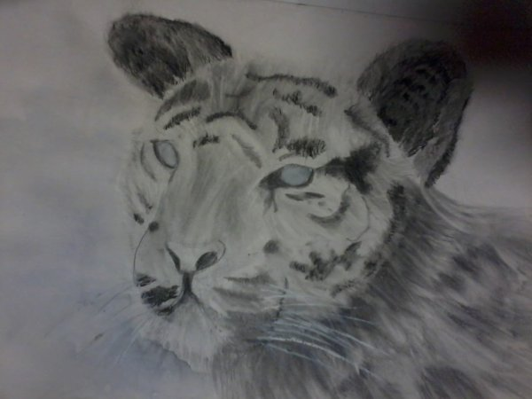 dessin réalisé au crayon ( Et les yeux et le fond à l aquarelle )