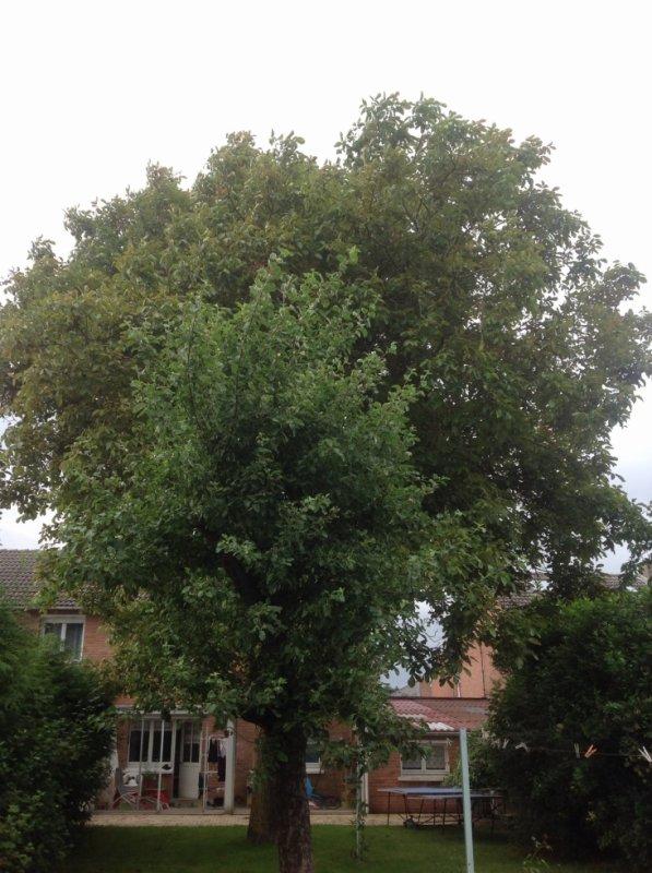 Un arbre peut en cacher un autre.