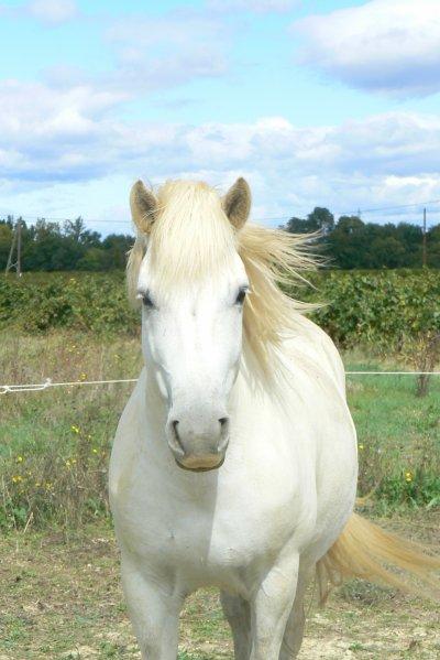 Des chevaux par millier qui galopent trop chouté , des chevaux par millier qui ramènent leurs cavaliers