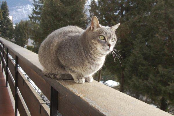L'émissaire du balcon