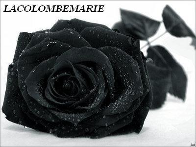 577271f38e27 Signification de la rose noir   Journalphoto
