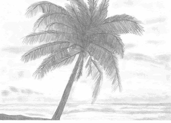 Plage cocotier mes dessins - Palmier cocotier ...