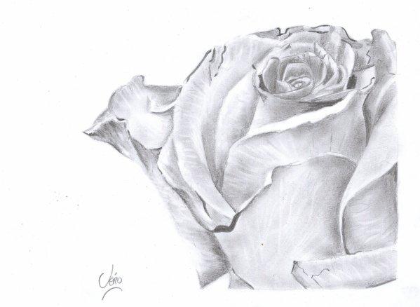La Rose Mes Dessins