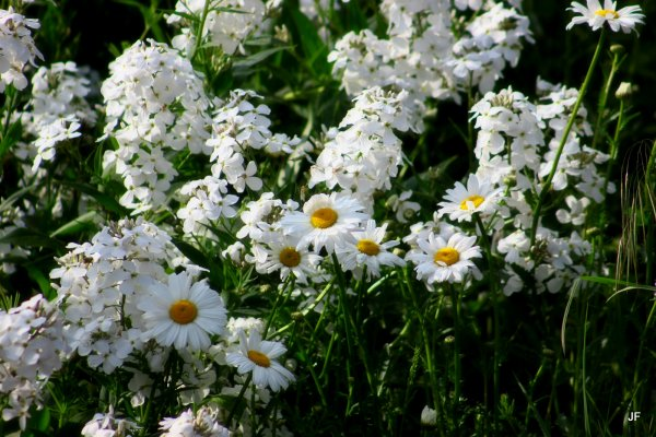 Fouillis blanc