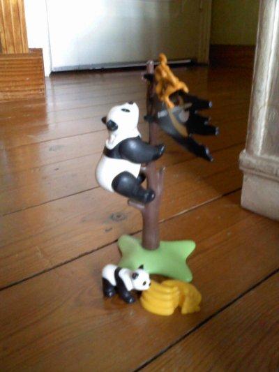 Les nouveaux animaux du zoo