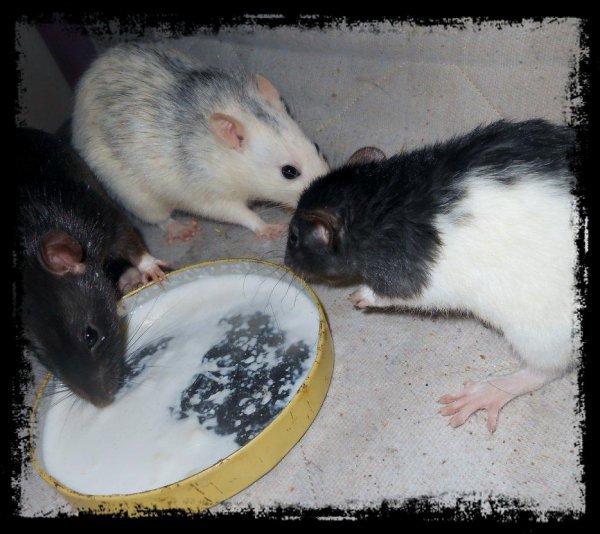 """Mes """"pépettes et le pot de lait"""""""