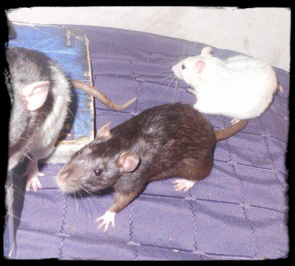 mes bourgeoises (RITA, TIA et CHULA)