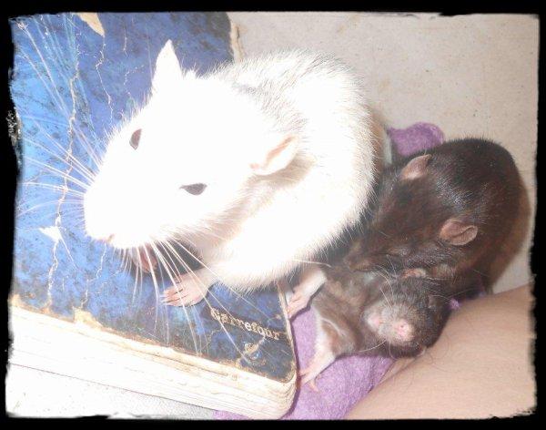 Mes Bourgeoises ( Tia, Rita et Chula)