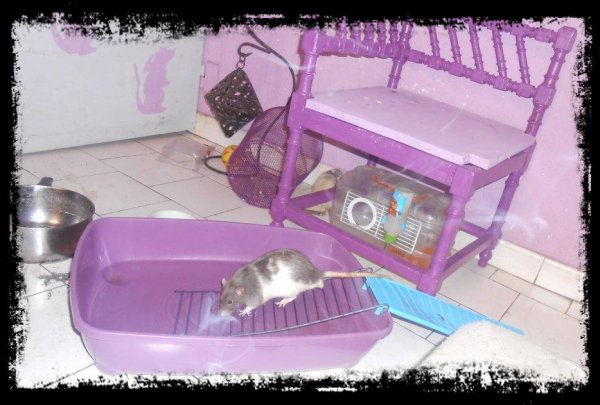 Piscine à Rats