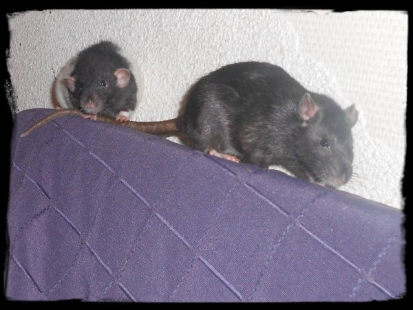 CHULA et RITA