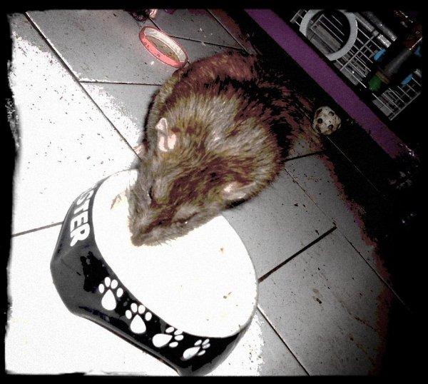 MIO et une gamelle de lait