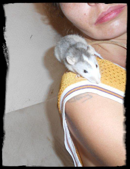 Mes Husky (les ptits nouveaux: MANZANA et Son Humaine; MANITO et son Humaine