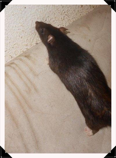 Mes Rat(e)s: tofs en vrac