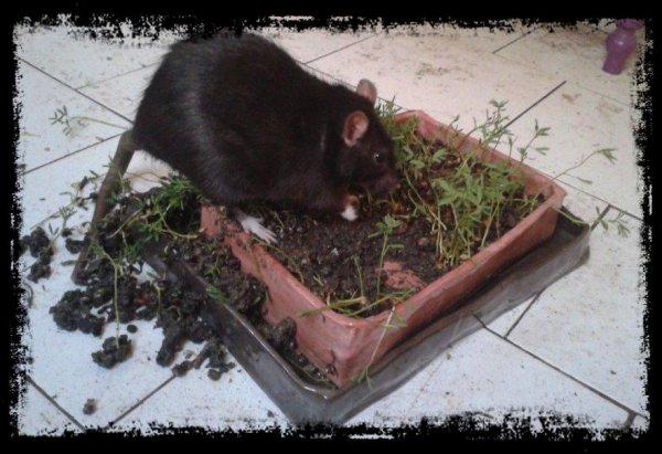 Rita jardine...