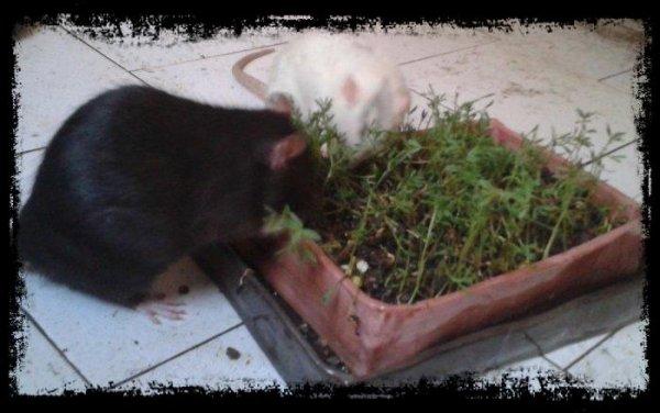 jardinage (Rita et Manzana; avril 2017)