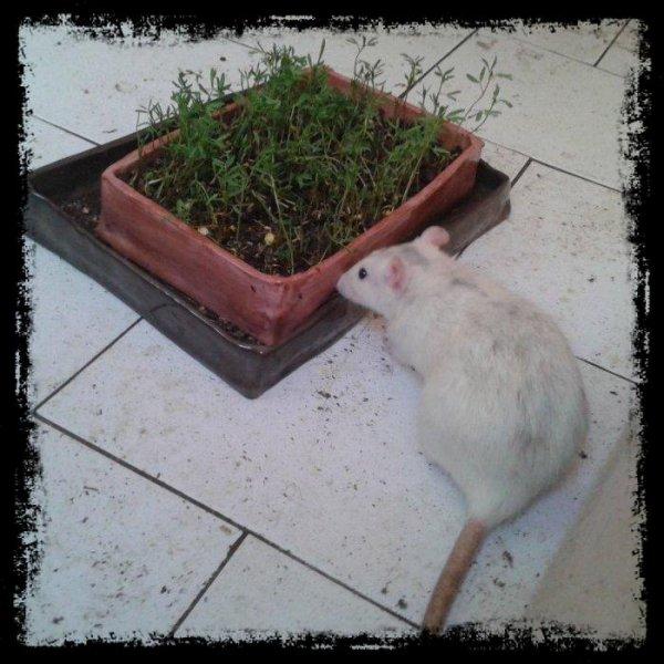 Zazouille jardine...