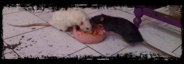 Manito et Rosita