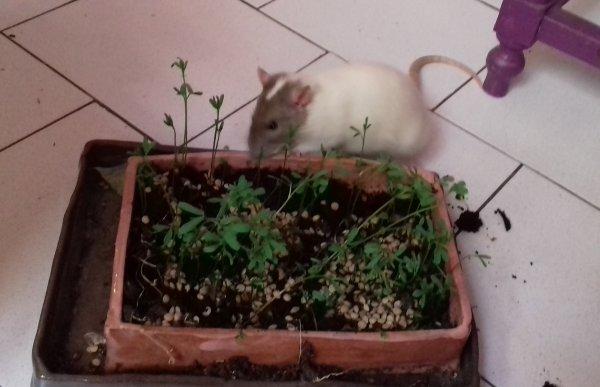 Quizas jardine