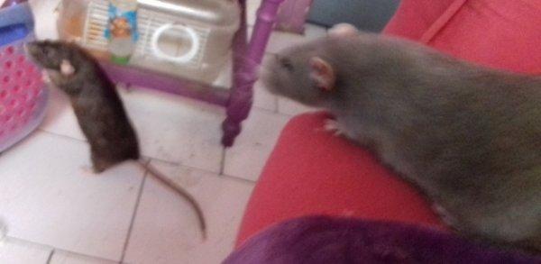 Rosita et Mucho