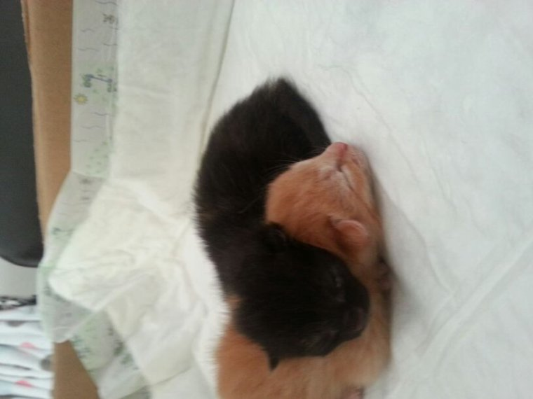 Mes nouveaux chatons