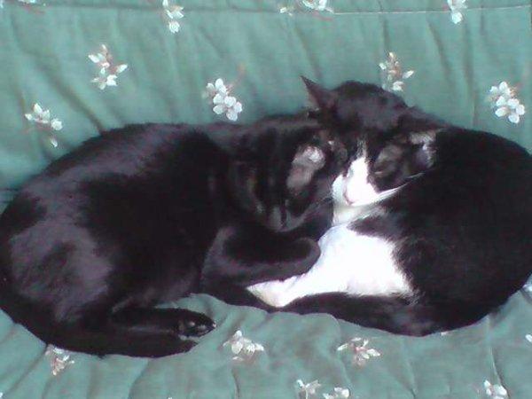mes chat / noir=guismo / noir et blanc=bandi.il sont  trop mimi !!!
