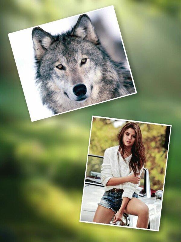 Chapitre 3 Partie 1 : Gentil le Loup