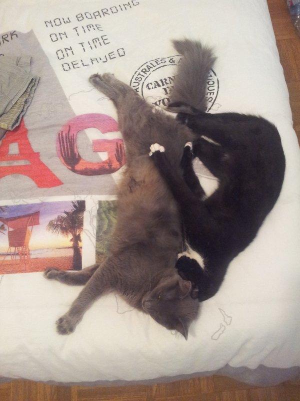 Grizzly et Gato toujours ensemble