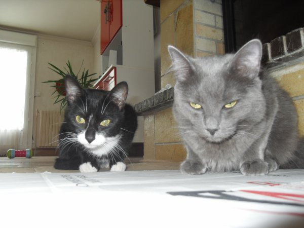 Gato et Grizzly
