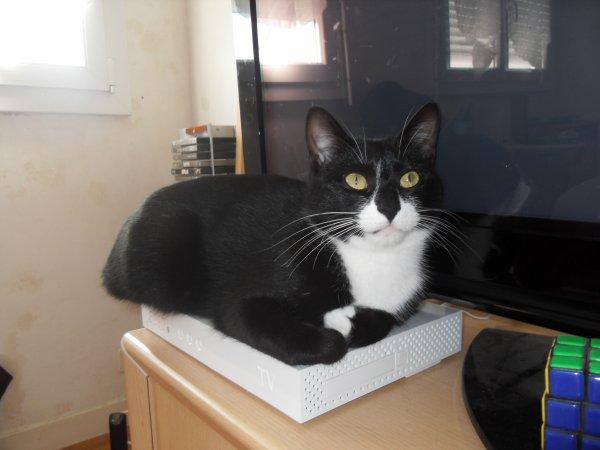 Mon petit Gato qui aime se reposer sur le décodeur