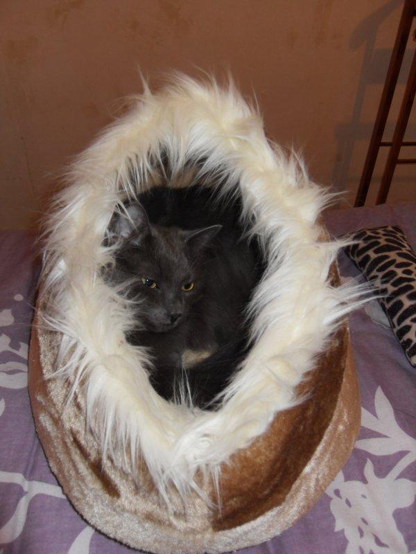 La nouvelle couchette des chats reçue