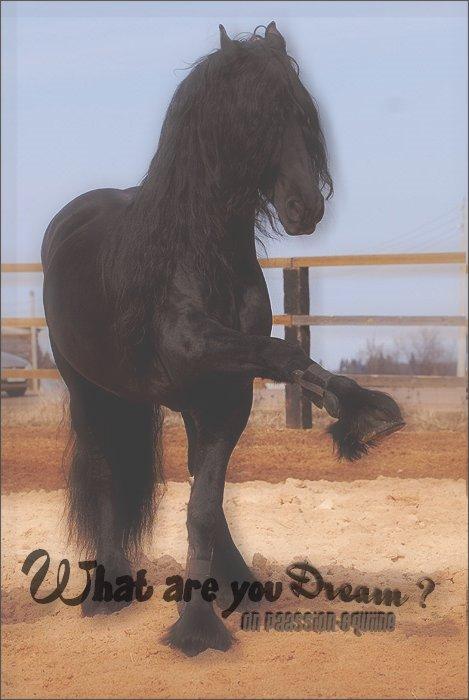 """""""L'air du paradis est celui qui souffle entre les oreilles d'un cheval"""""""