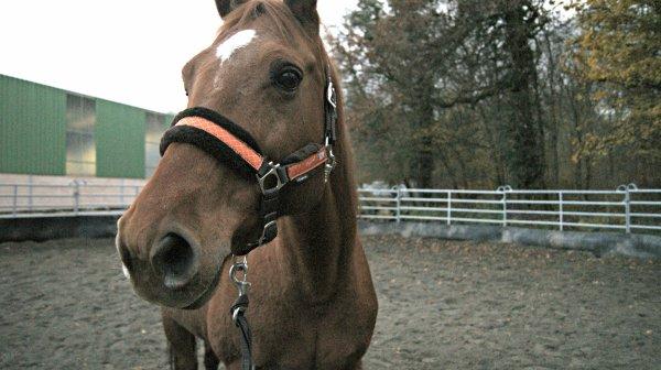 ♥ petit cheval