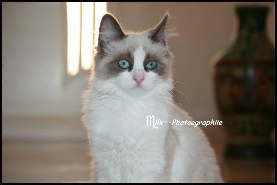 Chat qui dort ou chat qui joue, Gros chat noir ou petit chat roux, A chacun son chat, à chacun ses goûts !