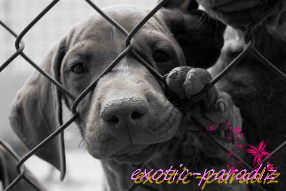 Non à la maltraitence !!!      STOP aux conneries ...     Les animaux sont des êtres vivant tout comme nous, ils ont des droits et méritent eux aussi d'être heureux et parfois même mieu que certaines personnes je pense. J'ai honte de vivre dans un monde pareil tout cela ne devrait pas exister. Il faut agir pour que ça change.