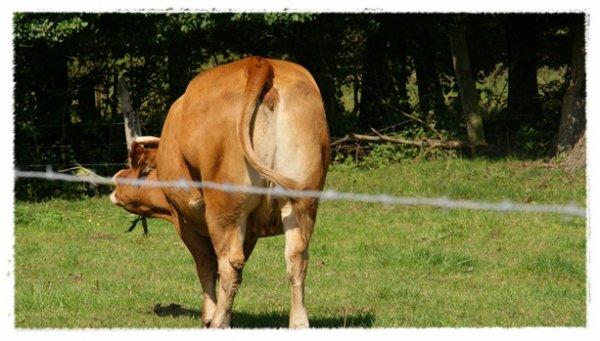 cette vache ma fais penser a une personne!!!  mais la vache et quand méme plus propre !!! hihihihi !!!