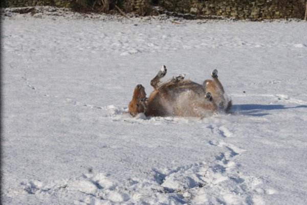 les bébés dans la neige